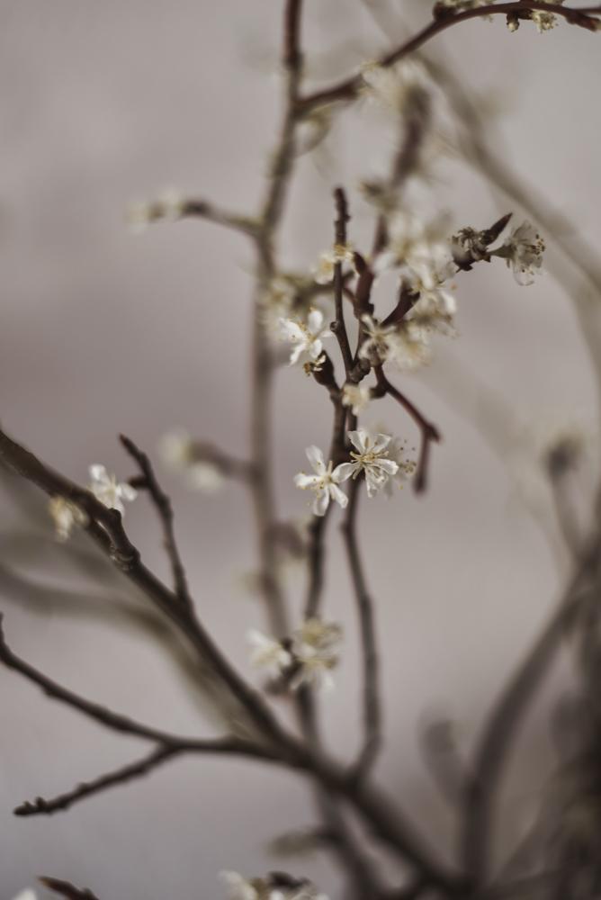 Blüten - Nachhaltig heiraten