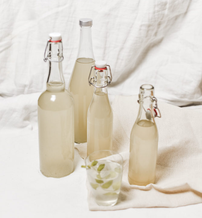 Holunderblüten kannst du bei Erkältungen und Husten als Tee und Sirup einnehmen. Ich zeige dir wie ich den Sirup einfach und günstig zubereite.