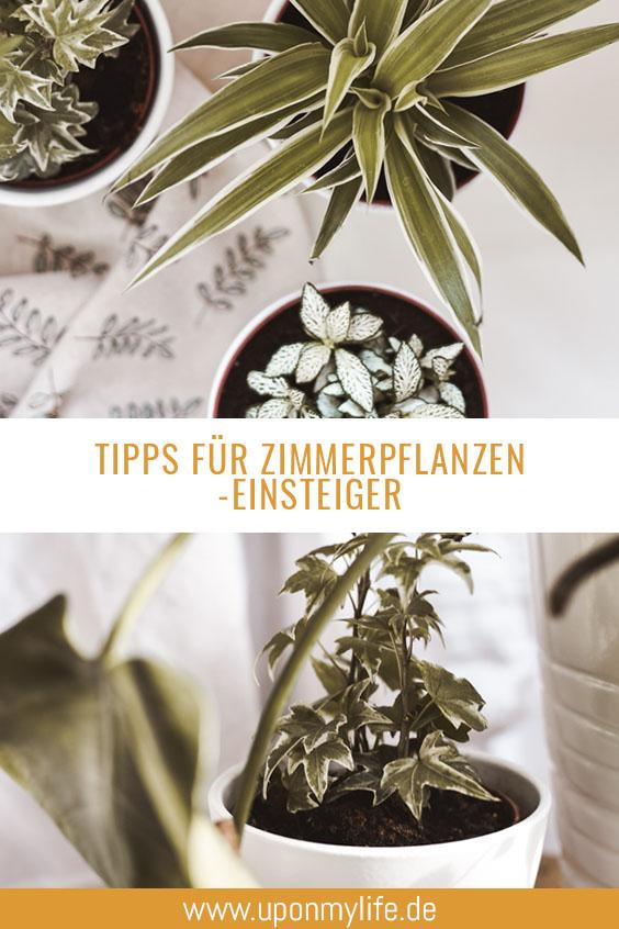 Zimmerpflanzen - Tipps für Anfänger