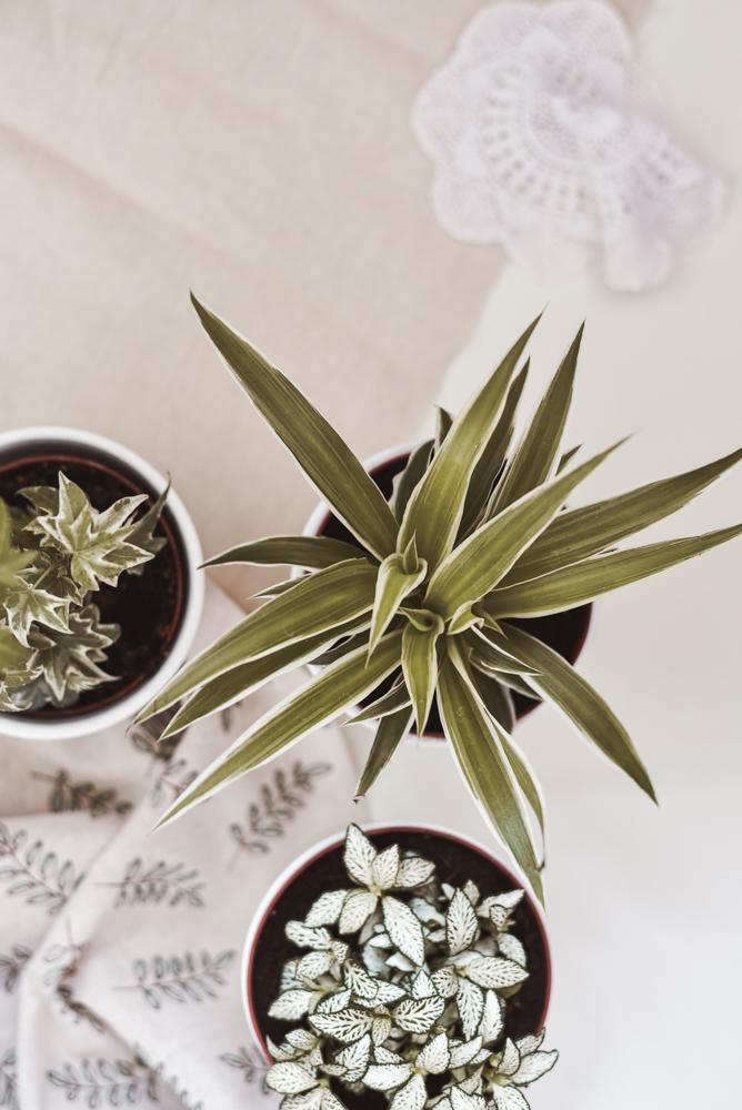 Pflanzen in der Wohnung