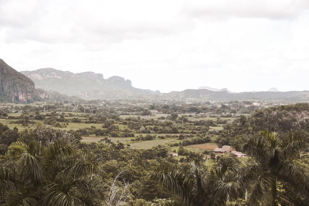 Was ist das Problem mit Palmöl?