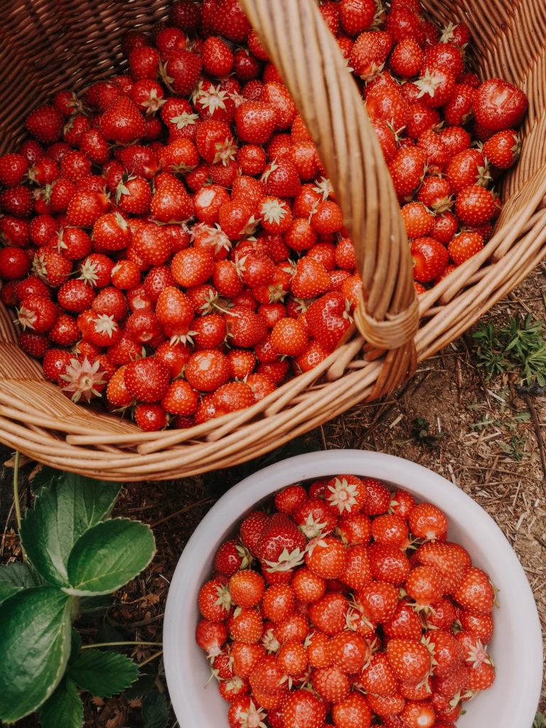 Saisonkalender für Obst, Gemüse und Salate - das ganze Jahr - ich zeige euch wann ihr was regional und saisonal bekommen könnt - der ultimative Überblick #saisonal #regional #saisonkalender