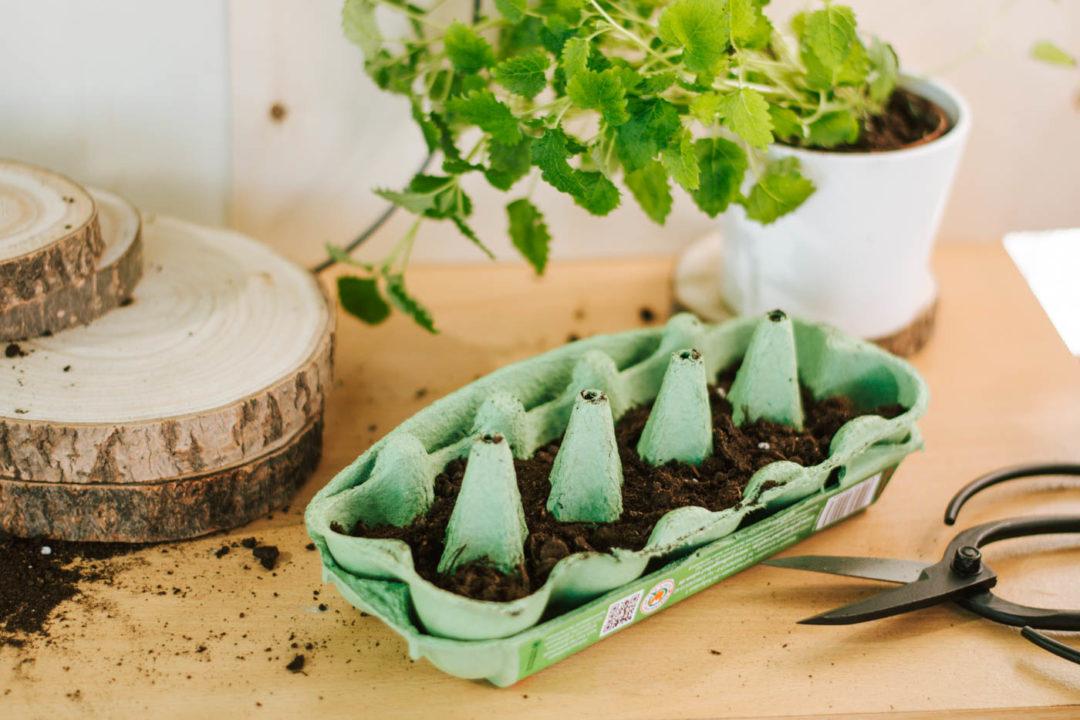 Anzuchttopf Eierkarton: So einfach DIY Upcycling Pflanztopf selber machen und Gemüsesamen einsäen. DIY Anzuchttöpfe für für Balkon und Garten