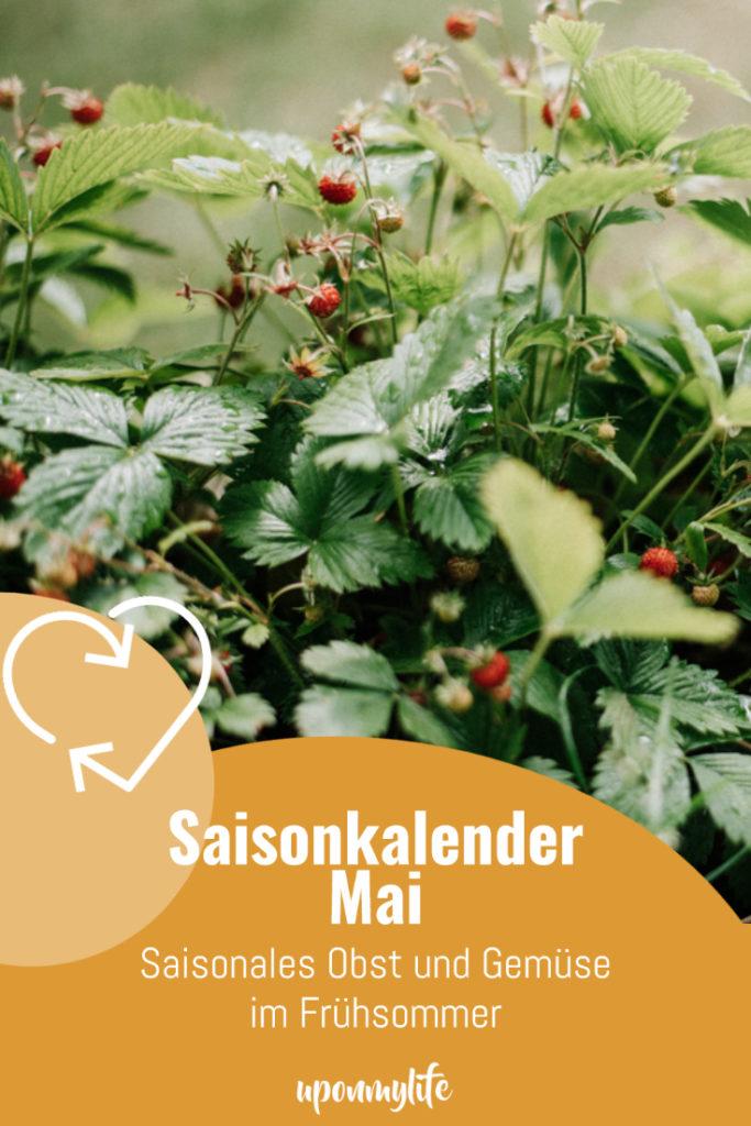 Saisonkalender Mai: Saisonales Obst und Gemüse im späten Frühlingsmonat Mai. Ernte von Rhabarber, Spargel, Frühlingszwiebeln, Erdbeeren ...