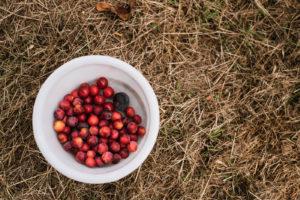 Saisonkalender August: Saisonales Obst und Gemüse im späten Sommermonat August. Ernte von Brombeeren, Kartoffeln, Stachelbeeren, Himbeeren ...