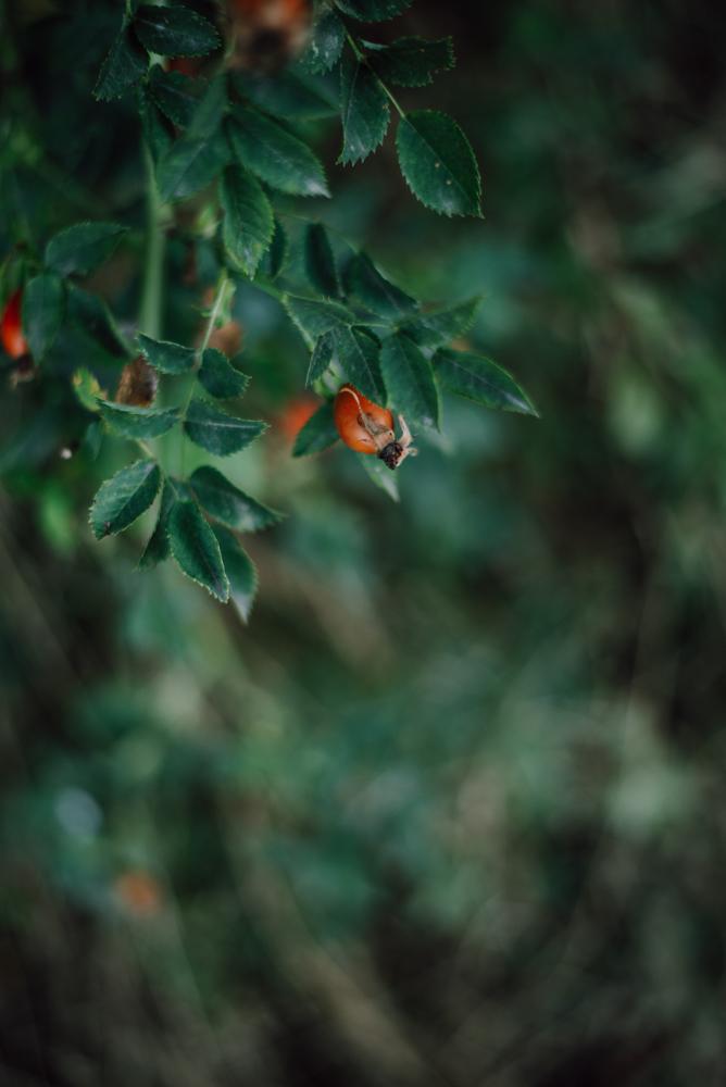 Saisonkalender September: Saisonales Obst und Gemüse im spätsommerlichen Monat September. Ernte von Zwetschgen, Kürbissen, Trauben, ...